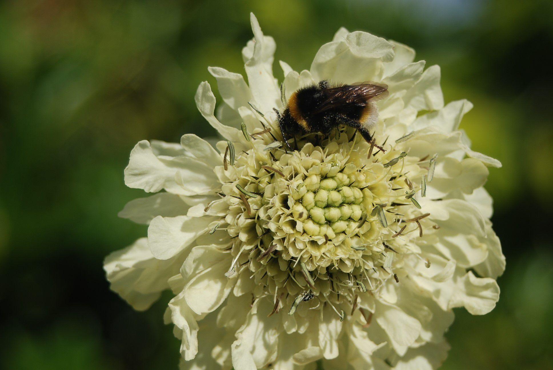 contactflowerandbee-c.jpg